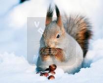 3d Kaart Winter Eekhoorn
