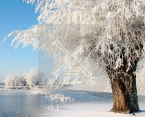 3d Kaart Winter Boom