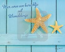 Hc Wemeldinge Zeester
