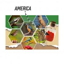 Magneet flesje hartjes America (3404838&)