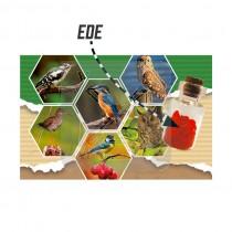Magneet flesje hartjes Ede (3404838&)