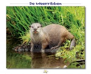 Hello Cards Weerribben